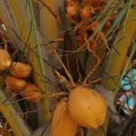 More palm..