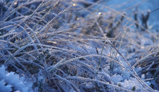 Frozen marshland VI